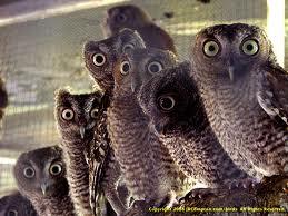 7 owls